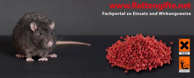 Rattengift